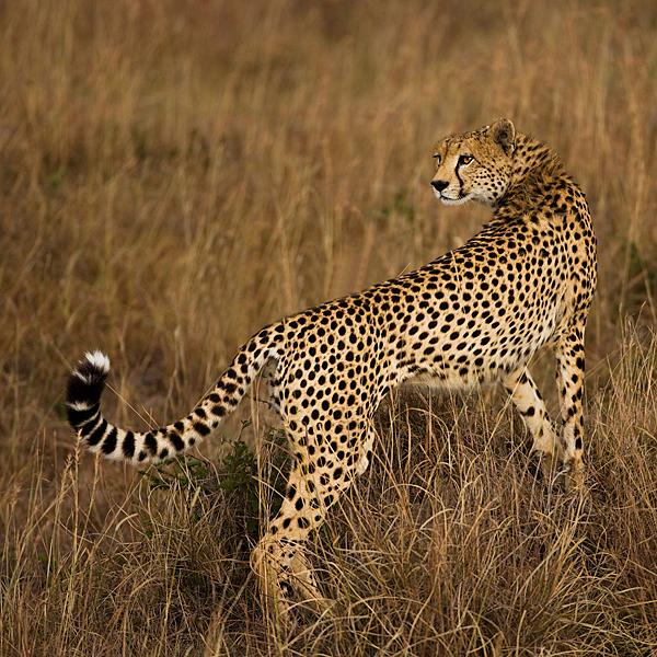 Kenya XXVl by serhatdemiroglu