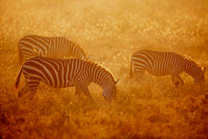 Kenya XLlV by serhatdemiroglu