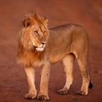 Kenya XLVl