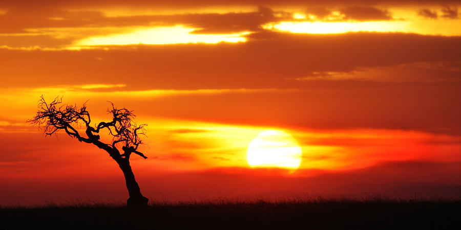 African Sunset ll by serhatdemiroglu