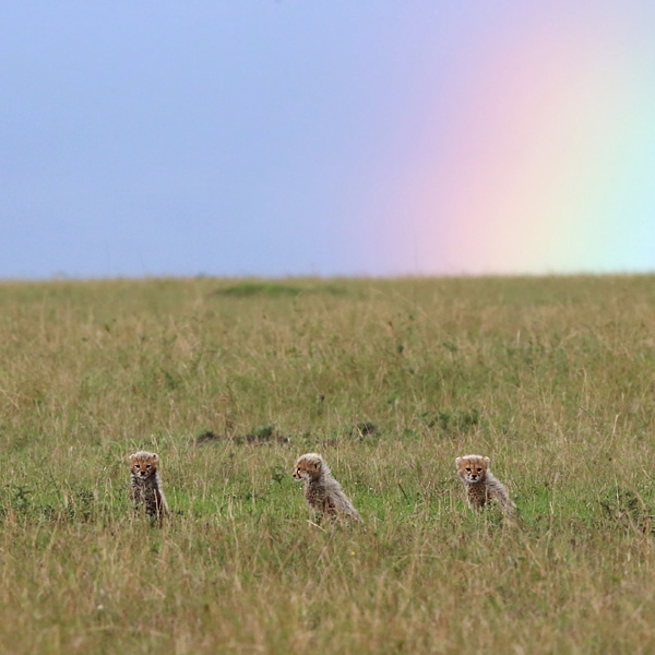 little three musketeers under the rainbow by serhatdemiroglu