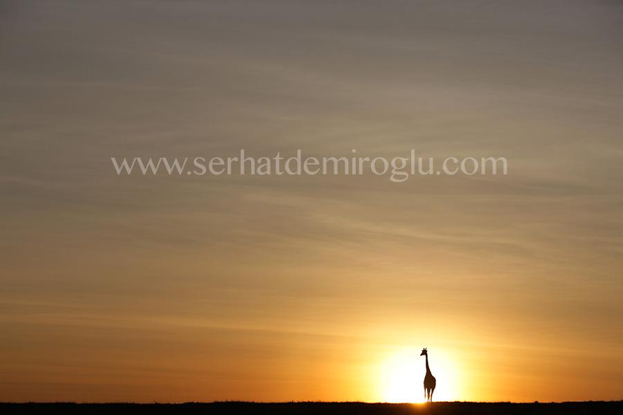 Morning in Mara by serhatdemiroglu