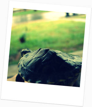 Turtle in a Polaroid Picture