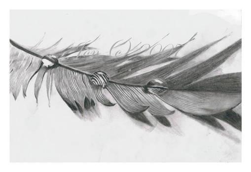 .featherdropsFINISH
