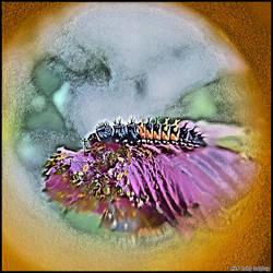 Baby-Ladybug by karron