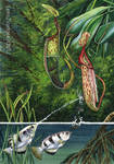 archerfish and pitcher plant