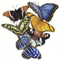 Amazonica butterflies by LeenZuydgeest