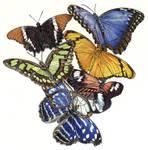 Amazonica butterflies