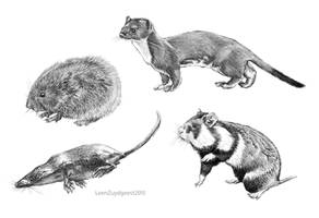 Dutch small Pleictocene mammals digital test