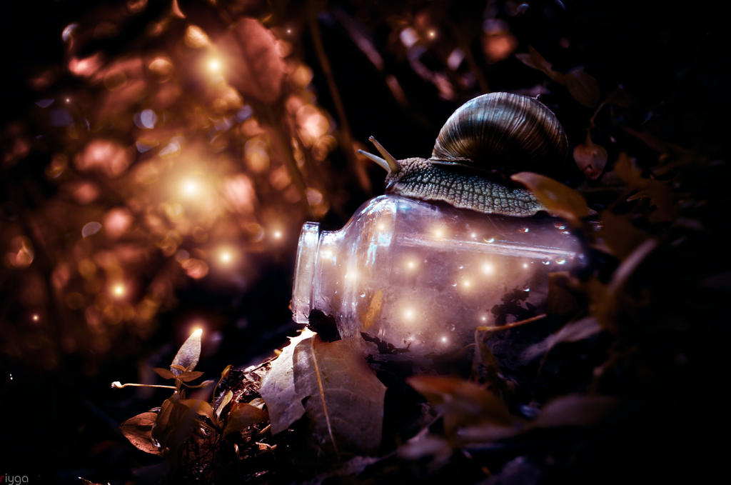 snails and fireflies 04 by Riyga