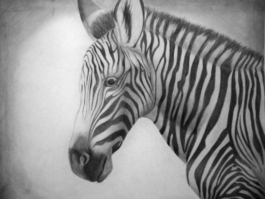 Easy Zebra Pencil Drawing Animalcarecollege Info
