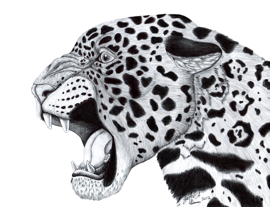 Jaguar Face Profile