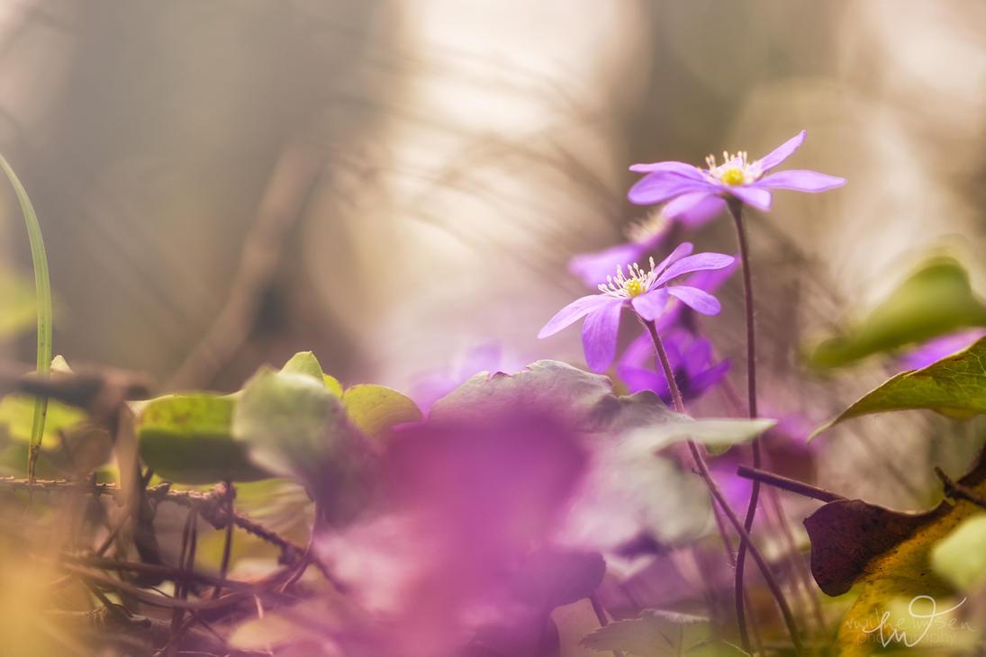 Sunlight by Elenihrivesse