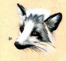 Fox by Sk8erGirljnp