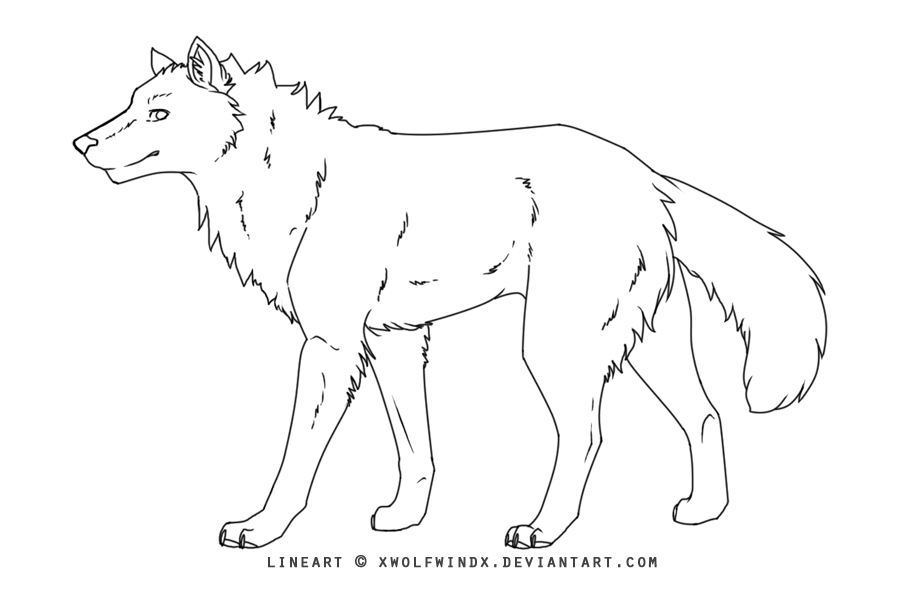 anime wolf lineart. Wolf Lineart 2 by *xWolfWindx