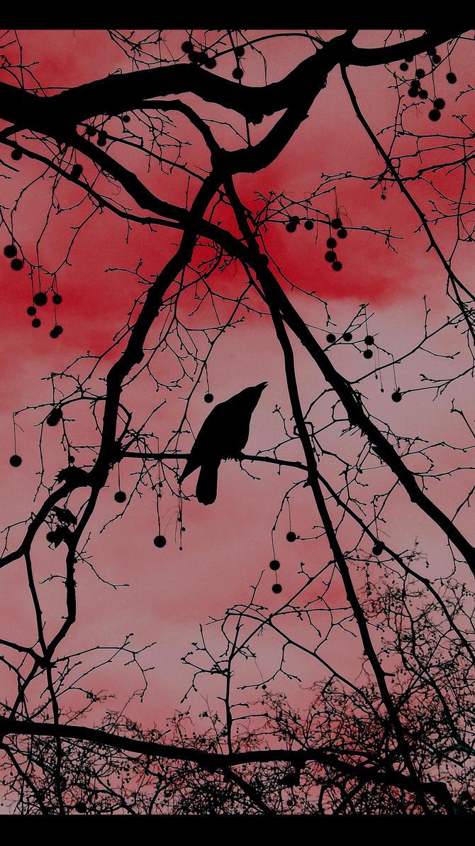 Crow by InterditMoi