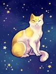 Starry Kitty