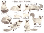 Many Shapes of Millie