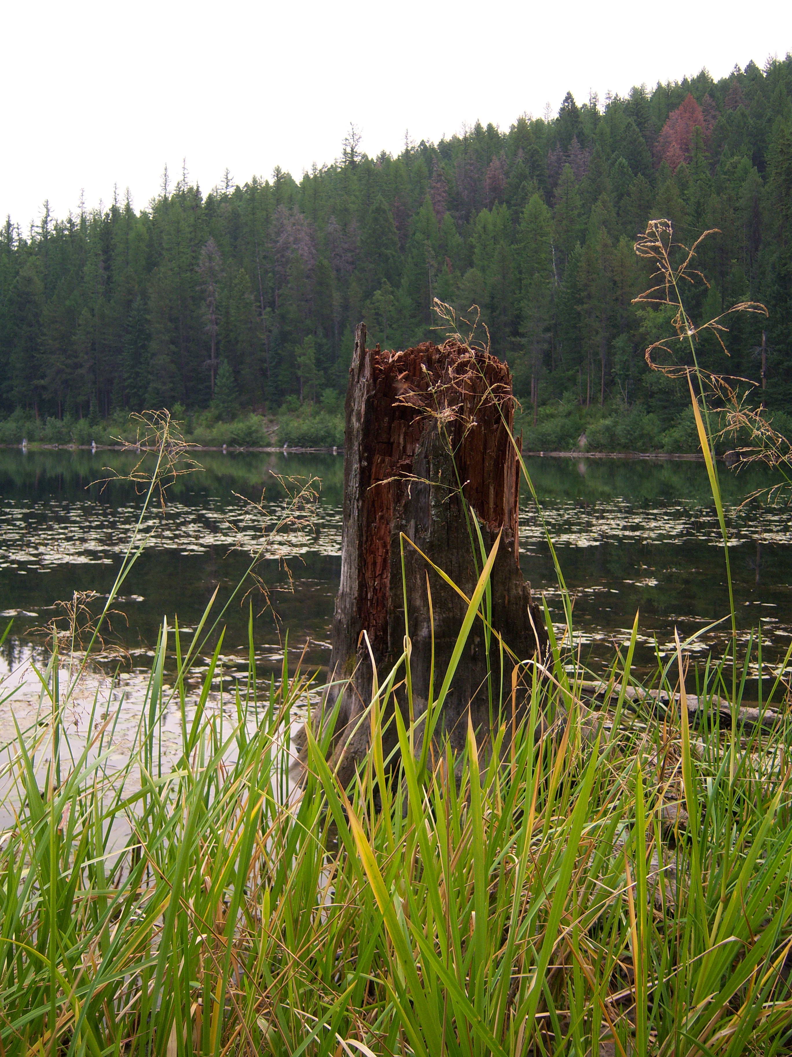 Tree Stump stock 1 by Aphoticbeauty