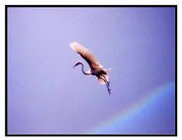 Rainbow Crane 2