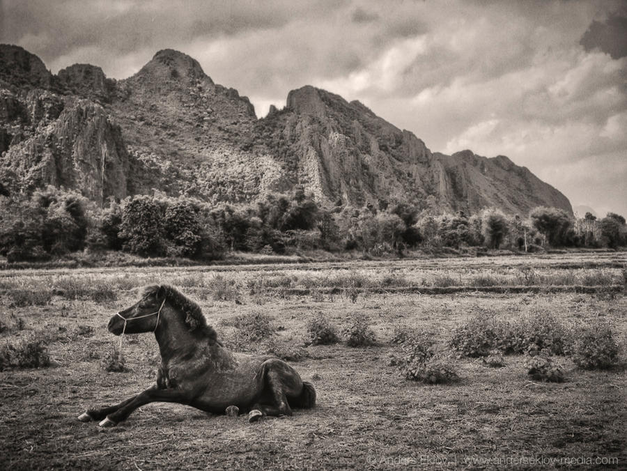 Horse and Landscape in Laos by AE-Photo