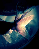 fish by koksuel