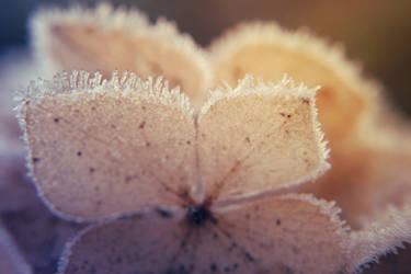 frost.bites II by koksuel
