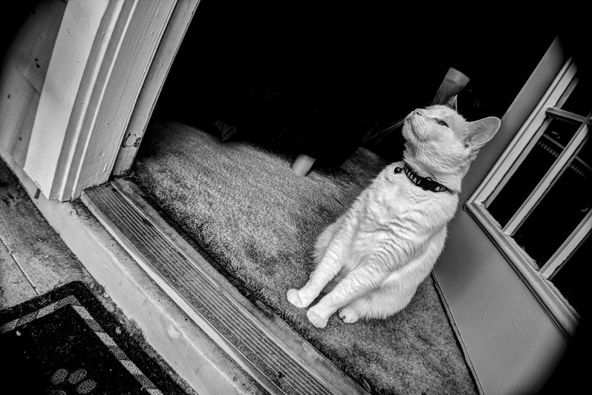 Guard Cat by RSMRonda