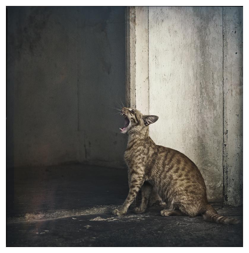 el gat by existencia5