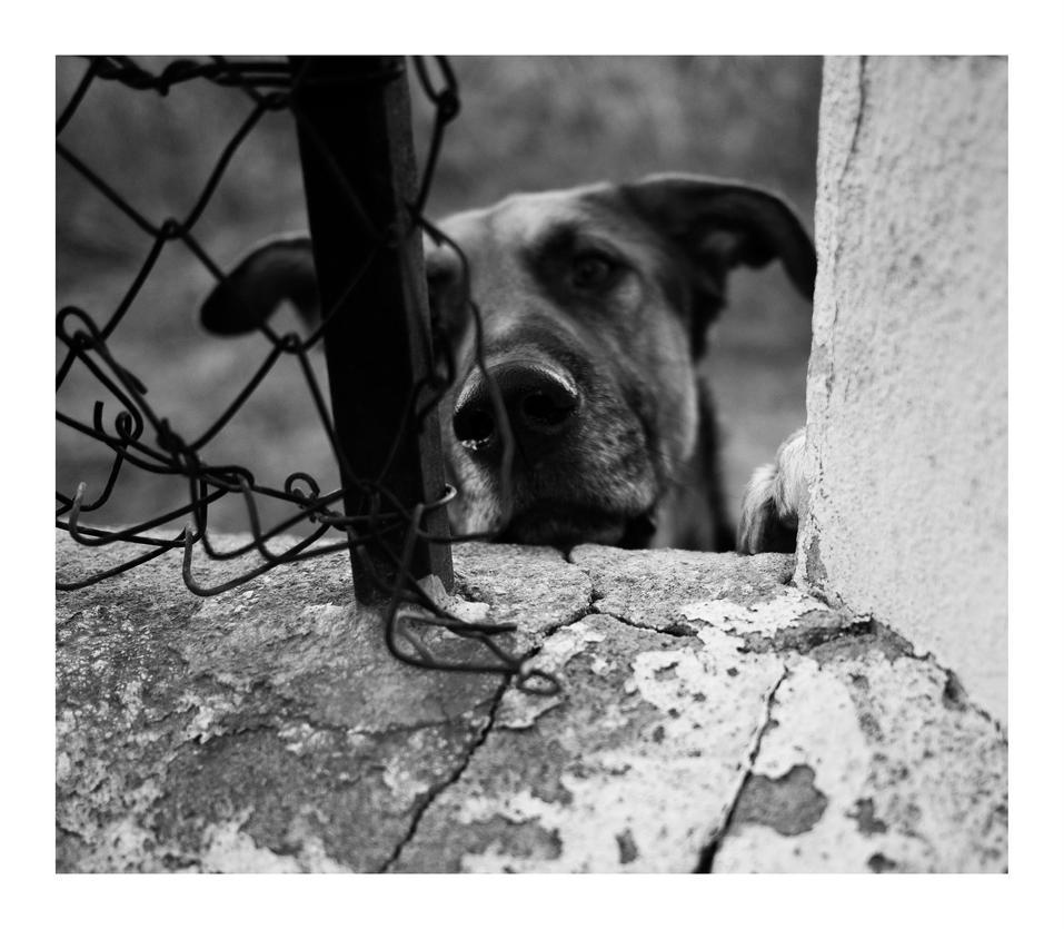 El perro by existencia5