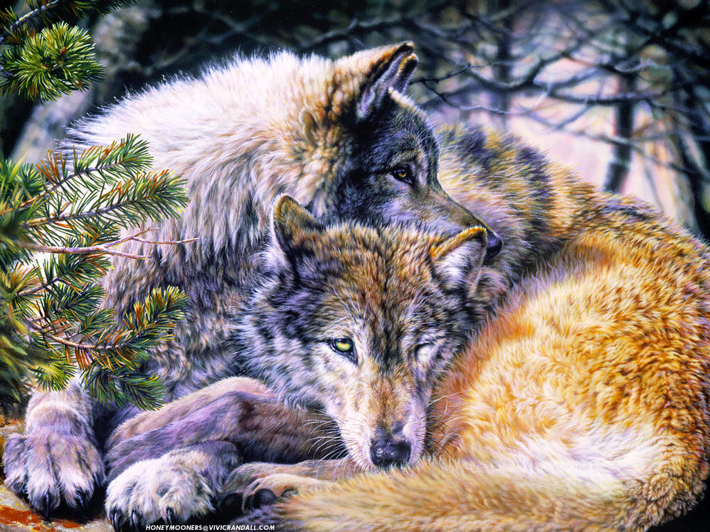 Honeymooners-Wolves Afterglow by par-me