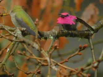 2021.Hummingbird.Color.Flare.Oak (1)