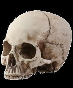 Hur-Dur's Profile Picture