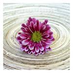 Flower on Circles