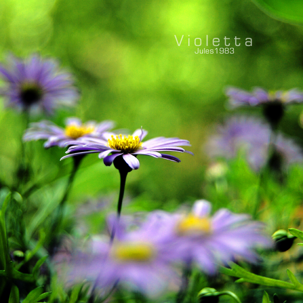 Violetta by Jules1983