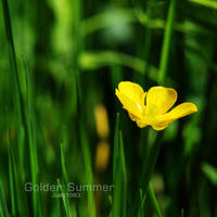 Golden Summer by Jules1983