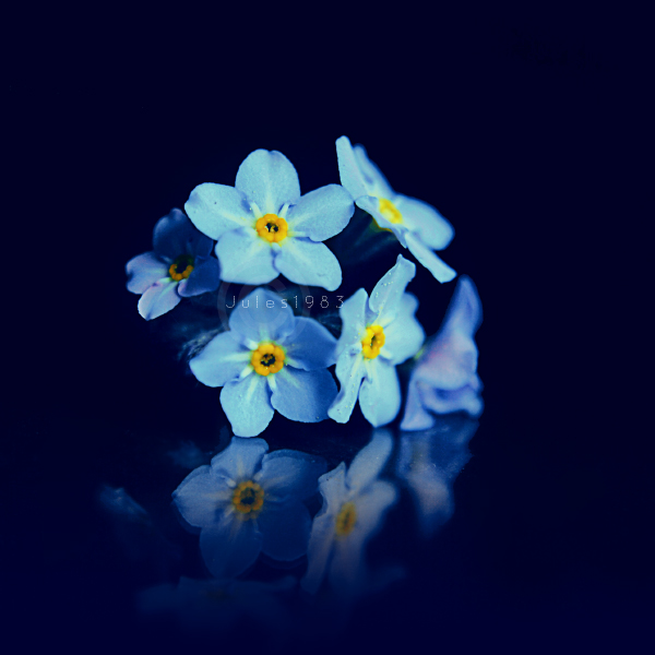 Forgetmenot by Jules1983