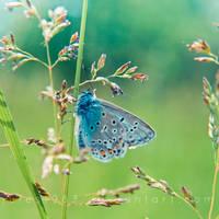 Flutter by Jules1983