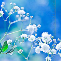Baby's Breath by Jules1983