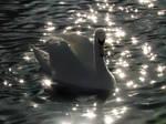 Swan Sparkle by listee