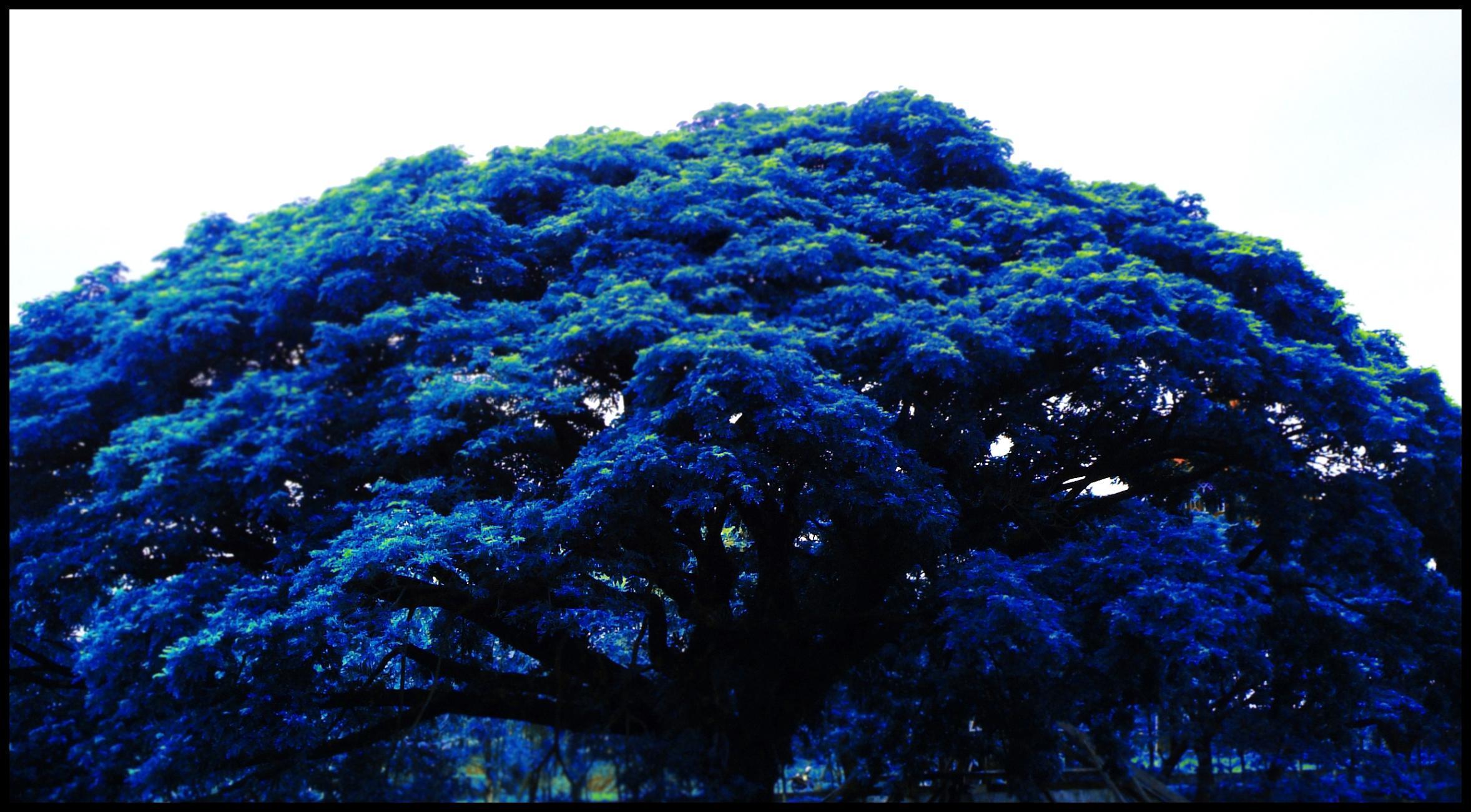 on leaf blue - photo #9