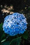 my, my baby blue by Ozzkat