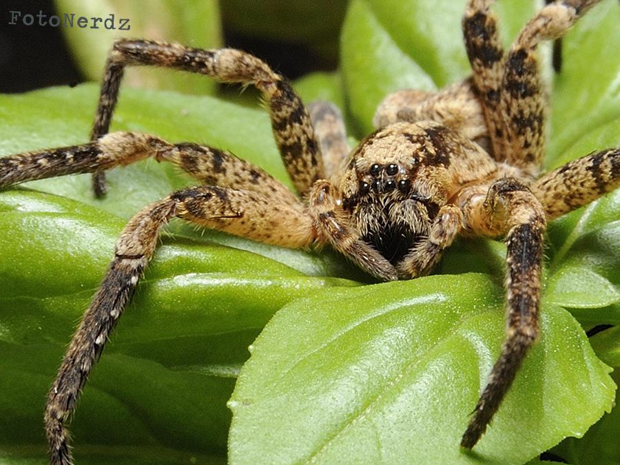 Arachnophobia by FotoNerdz
