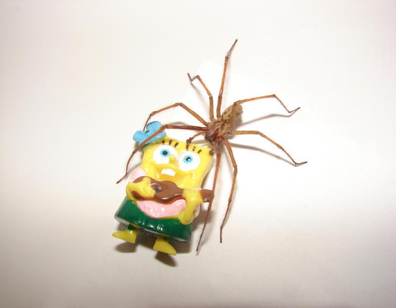 Not Dead Ted | Encyclopedia SpongeBobia | FANDOM powered by Wikia