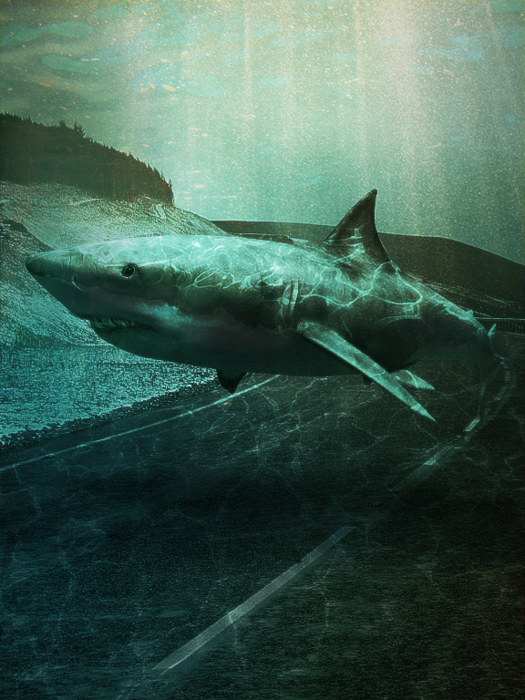 hit_the_road__shark__by_tjfx-d6fntt7.png