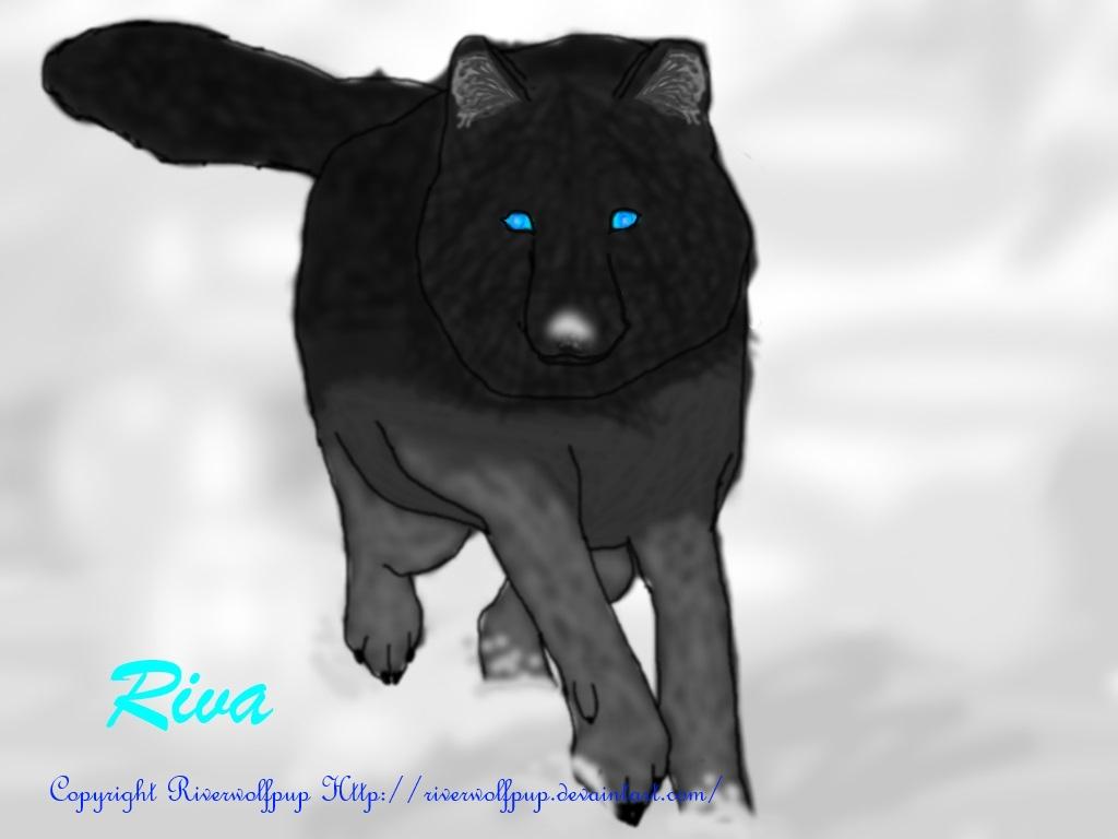 Blue Eyed Wolf Dog Puppy