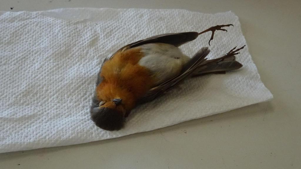 Poor Bird... :( by DragonFan656