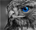 Hawk Eye by Chillstice