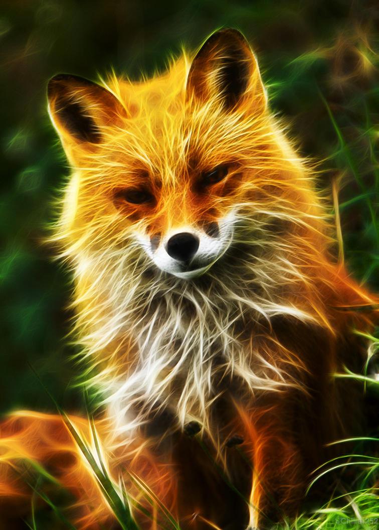 Red fox light fractal by chillstice on deviantart - Cool animal wallpaper light ...