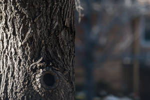 Bark by Chillstice